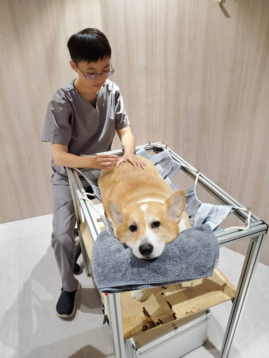 人類、動物針灸基礎理論大致相同