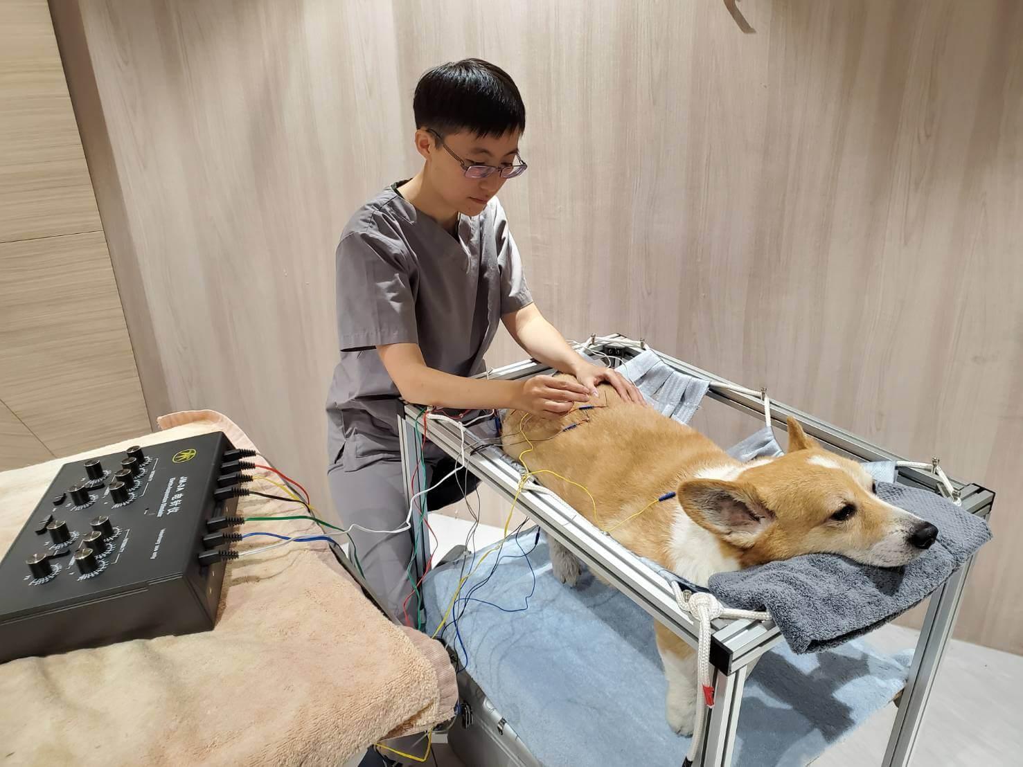 寵物也能針灸!高齡犬照護新選擇