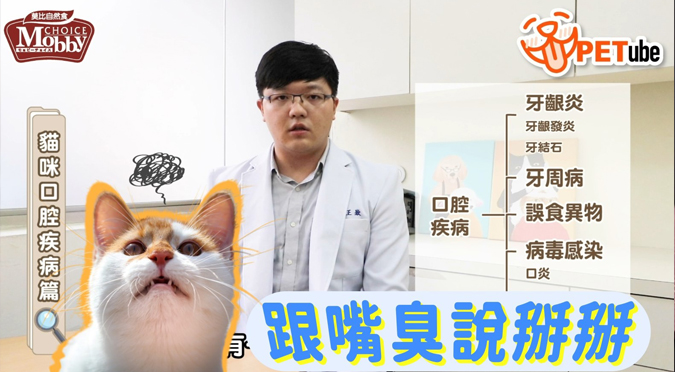 哈寵PETube-No.153 貓咪口腔疾病篇(feat. 王嶽獸醫師)