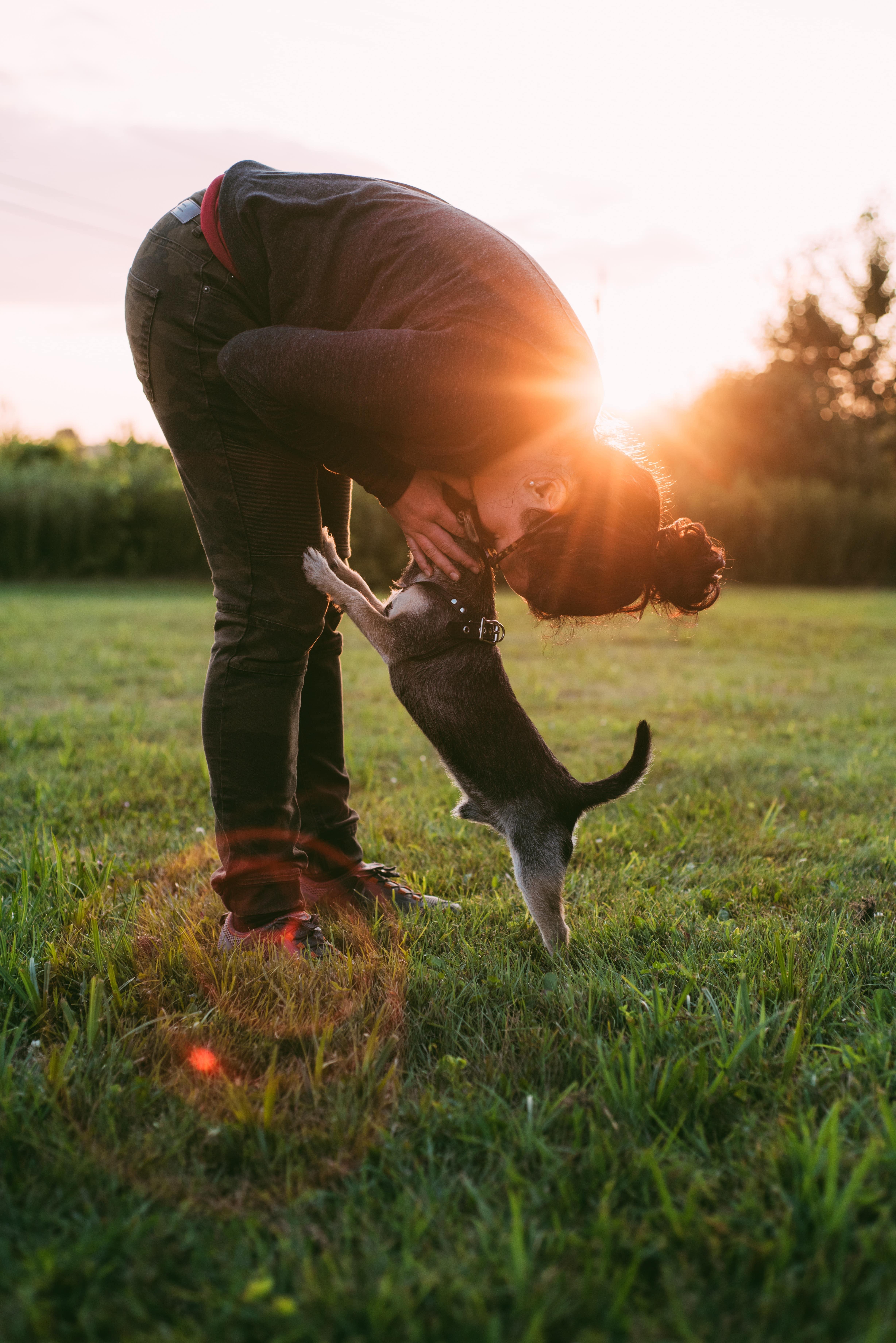 於外出時多加稱讚狗狗,可將「外出」這件事與「好的事物」有所連結,他們對外來刺激的負面反應將會有所改善