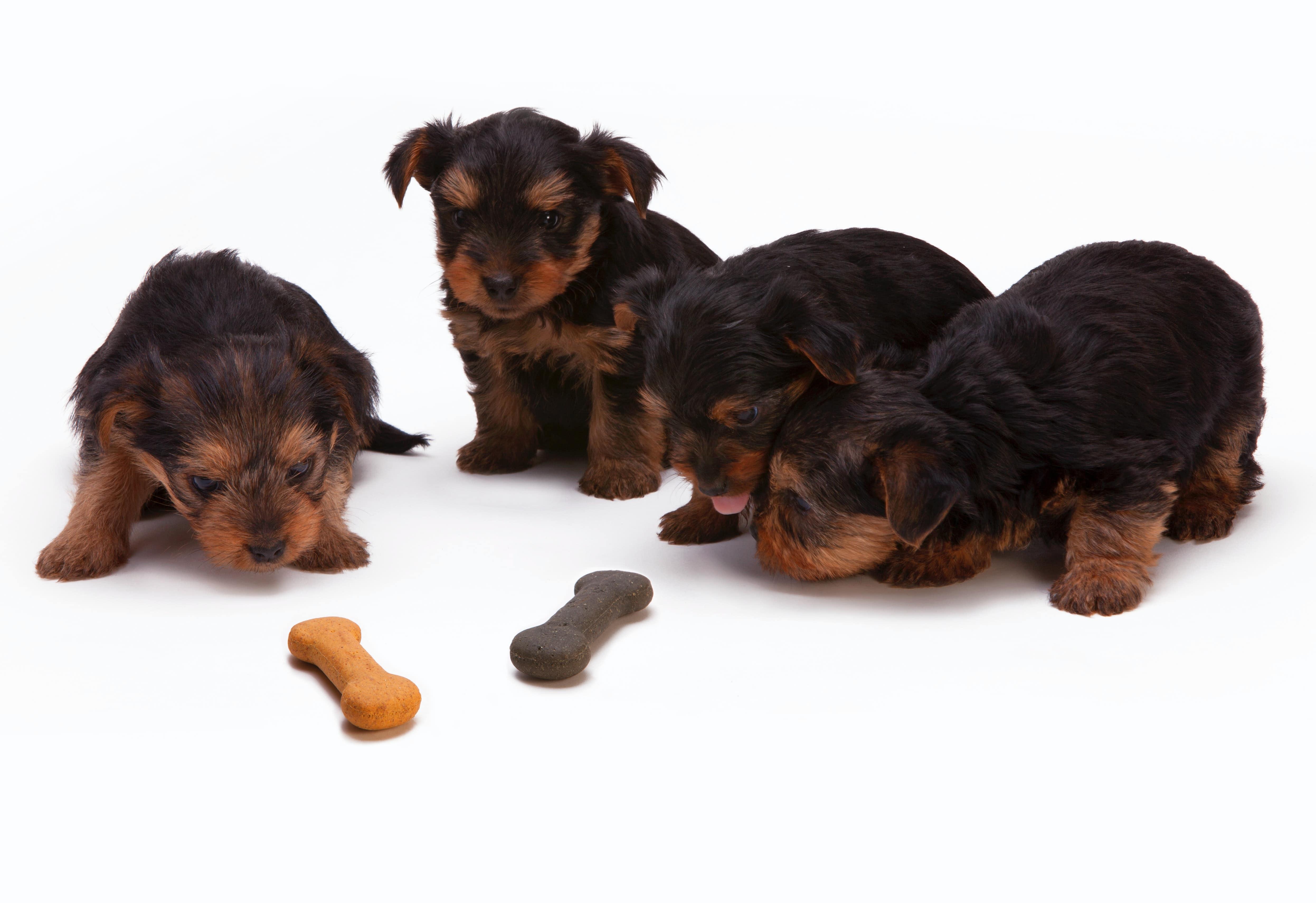 小型犬的飼料在成份上與大型犬有相當大的差異