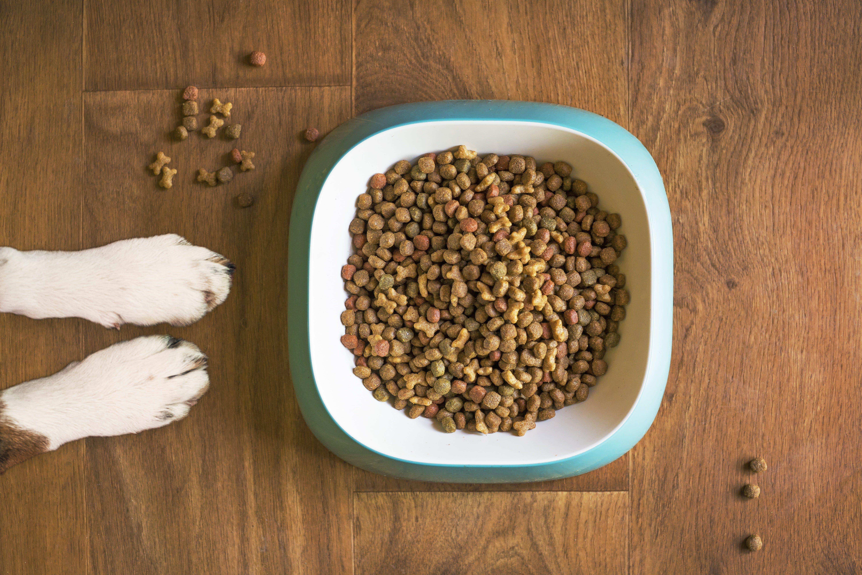 選擇對的飼料才能讓你的狗狗活力十足、健康滿滿