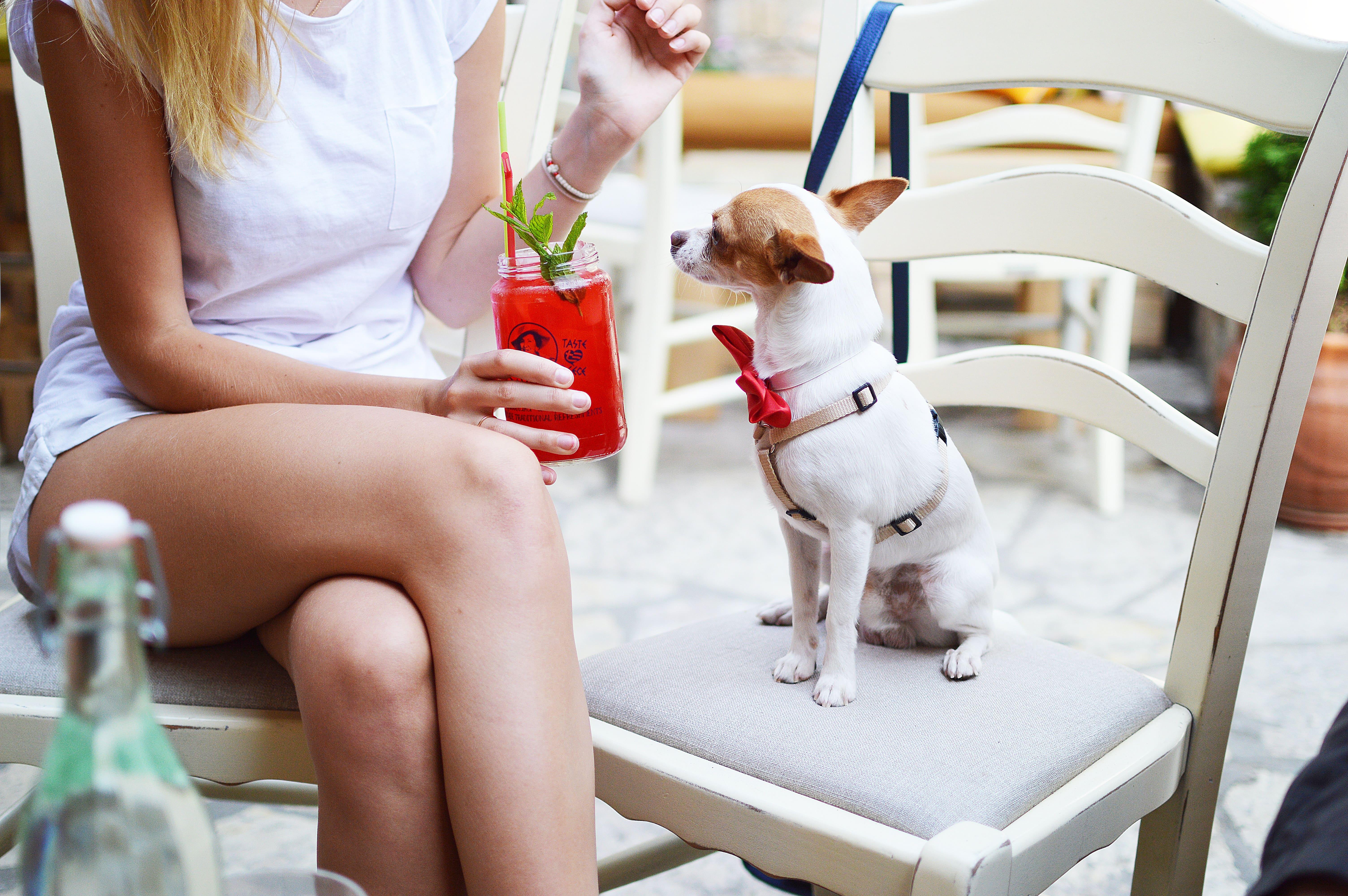 可嘗試教導小型犬坐下、趴下、等待、安靜等習慣,避免突發危險