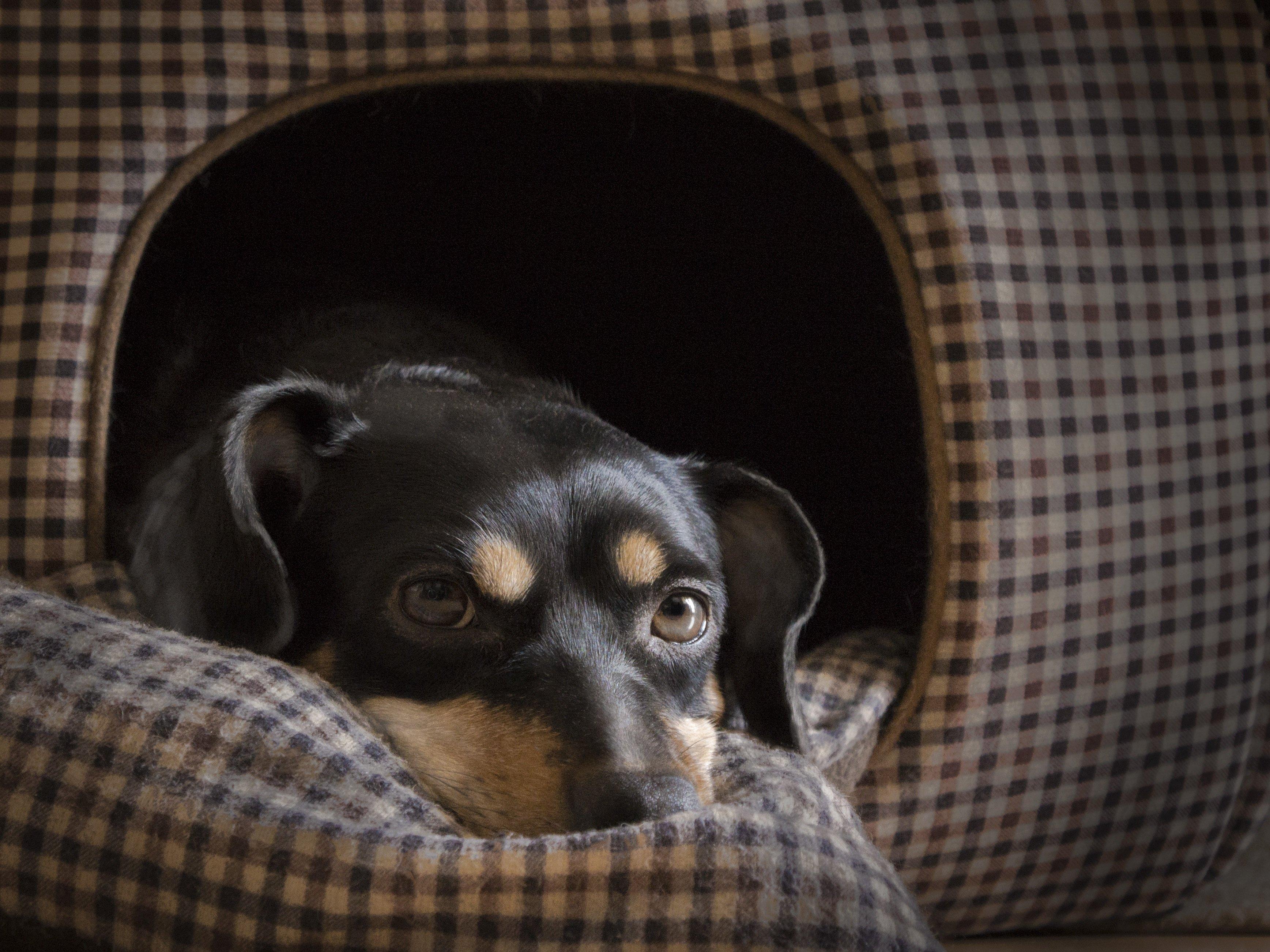 狗狗需要專屬的私密空間,才能完全消除警戒、安心歇息