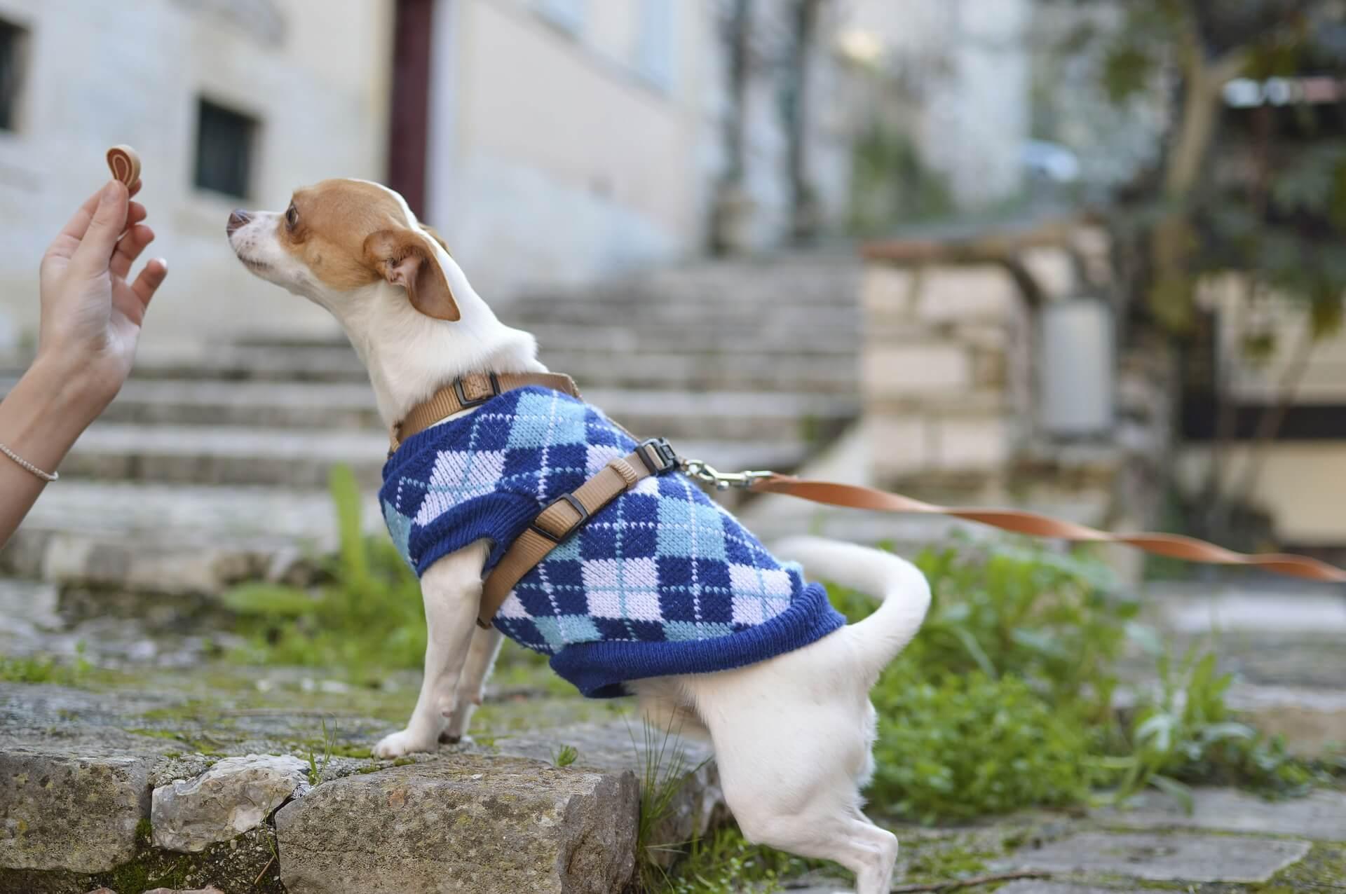 了解飼養的犬種特性以及身體狀態,進而挑選適合的飼料