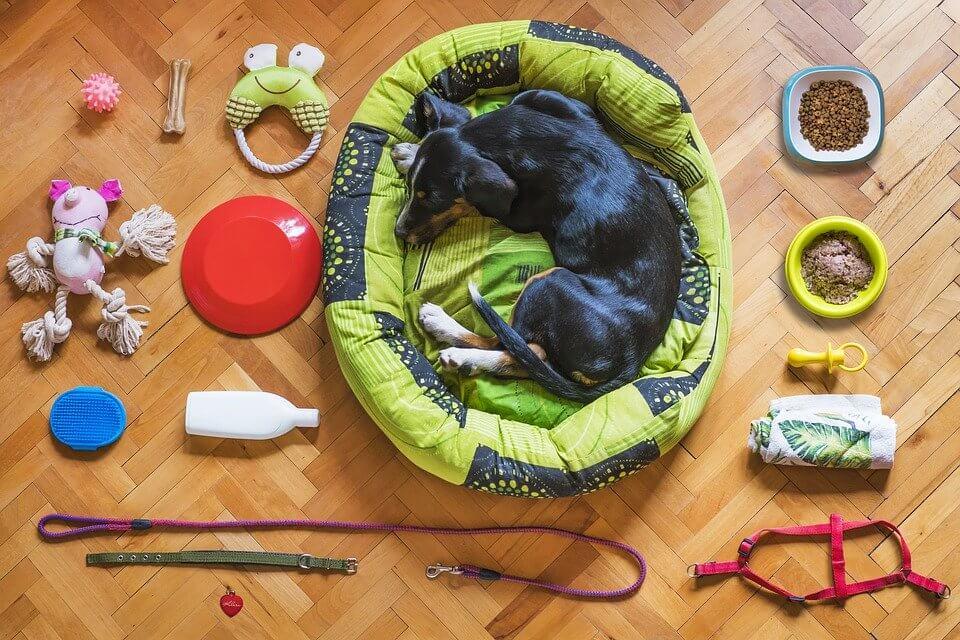 老犬腿部肌肉退化,生活品質要更加提升,防滑、睡墊透氣、散步限制速度