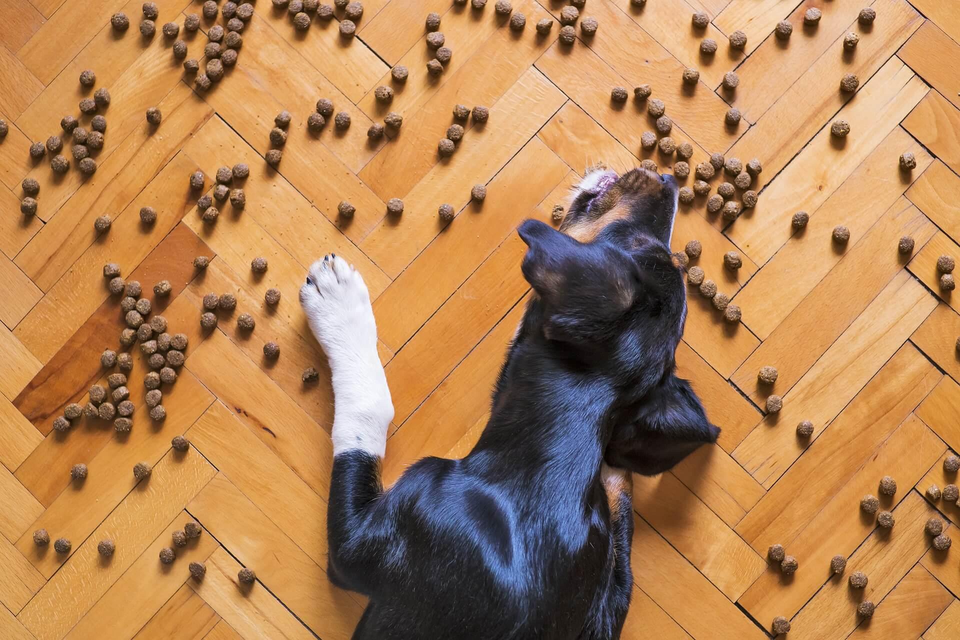 在挑選飼料時,要注意適口性和消化難易程度
