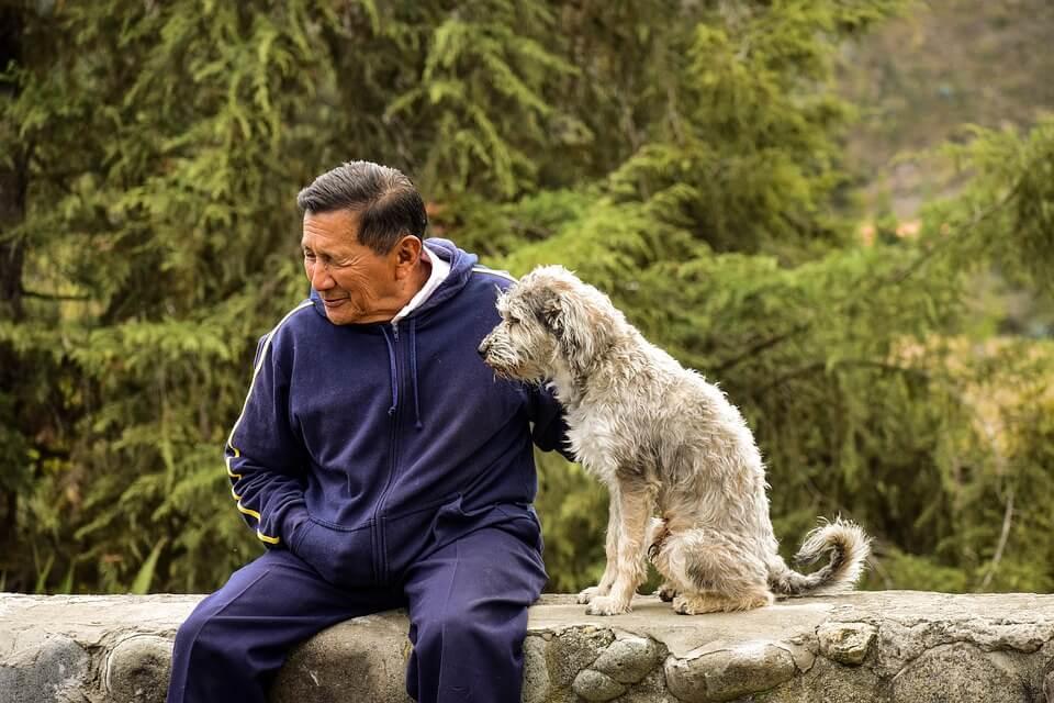 陪家中老犬一起健康快樂變老