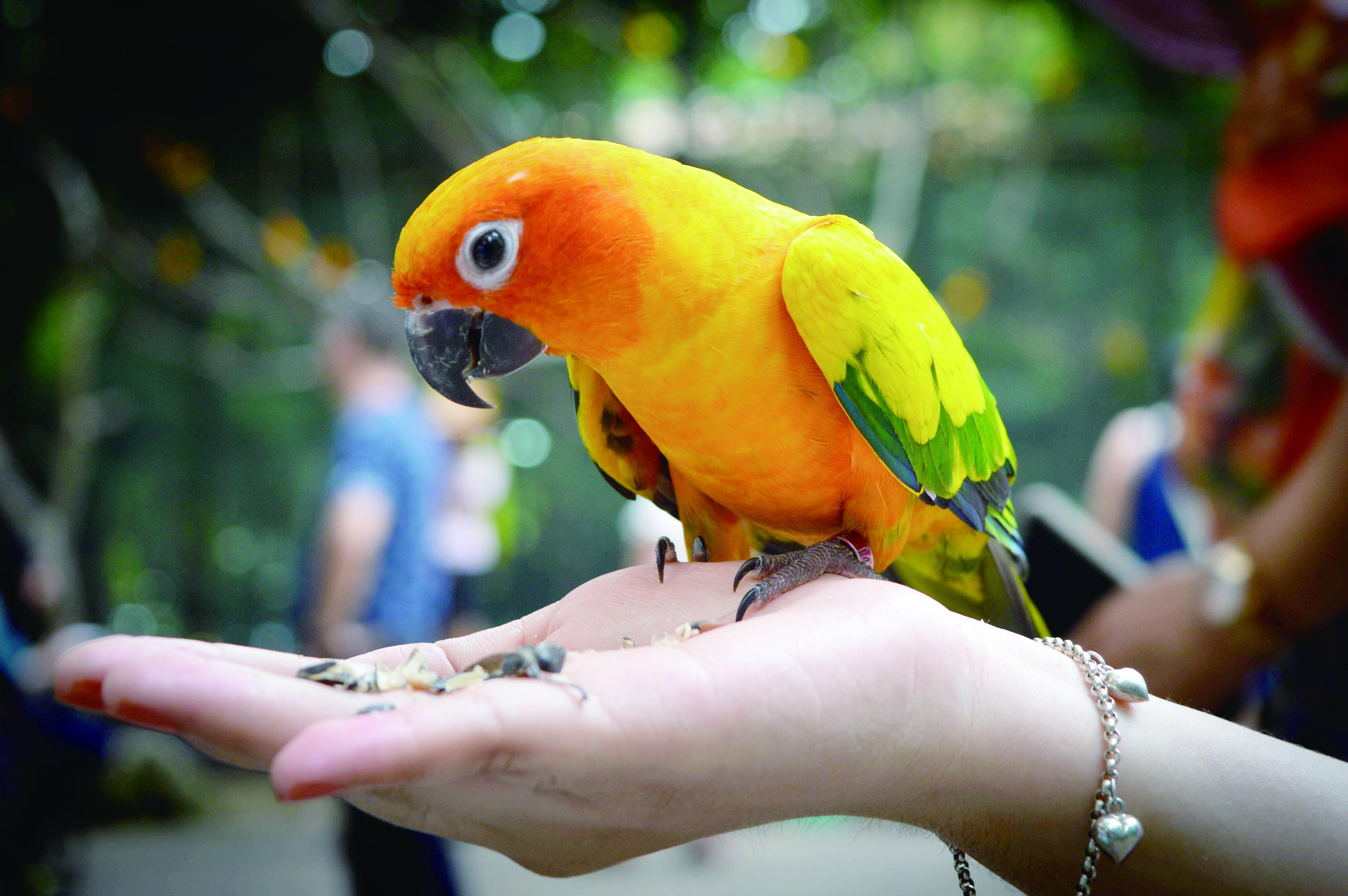 挑選鸚鵡的入門指標與建議