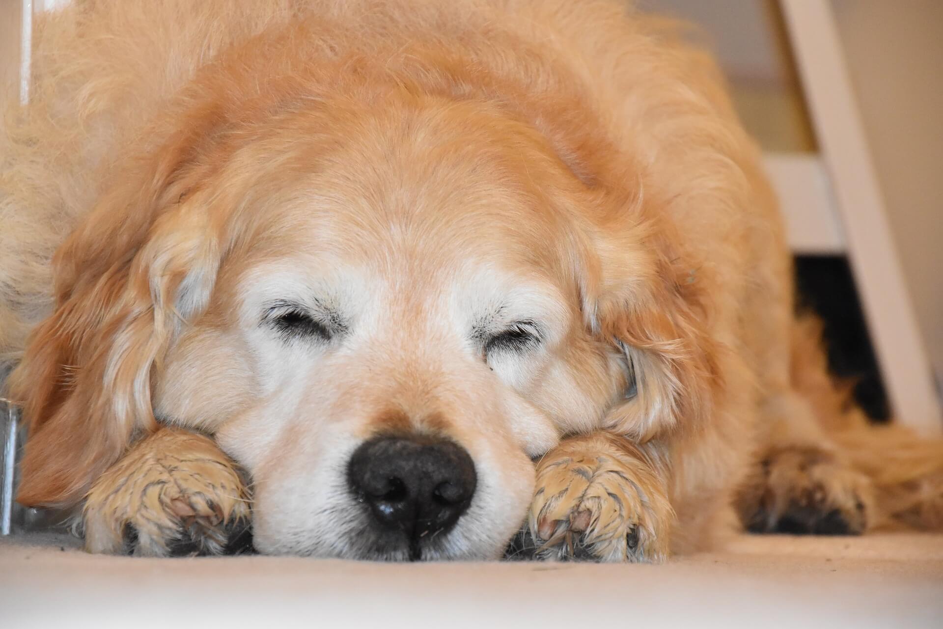 早期心衰竭的症狀包含嗜睡