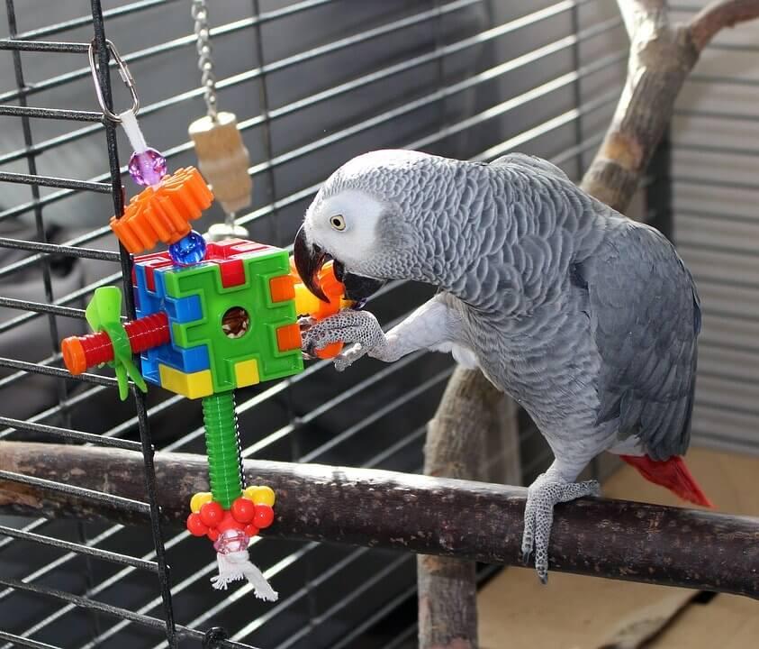很多鸚鵡其實很黏人、喜歡與人互動,令人感覺逗趣貼心