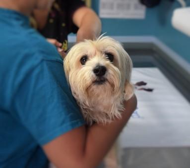 患有心腎疾病的老犬,建議至具有心腎專科的動物醫院做檢查診治