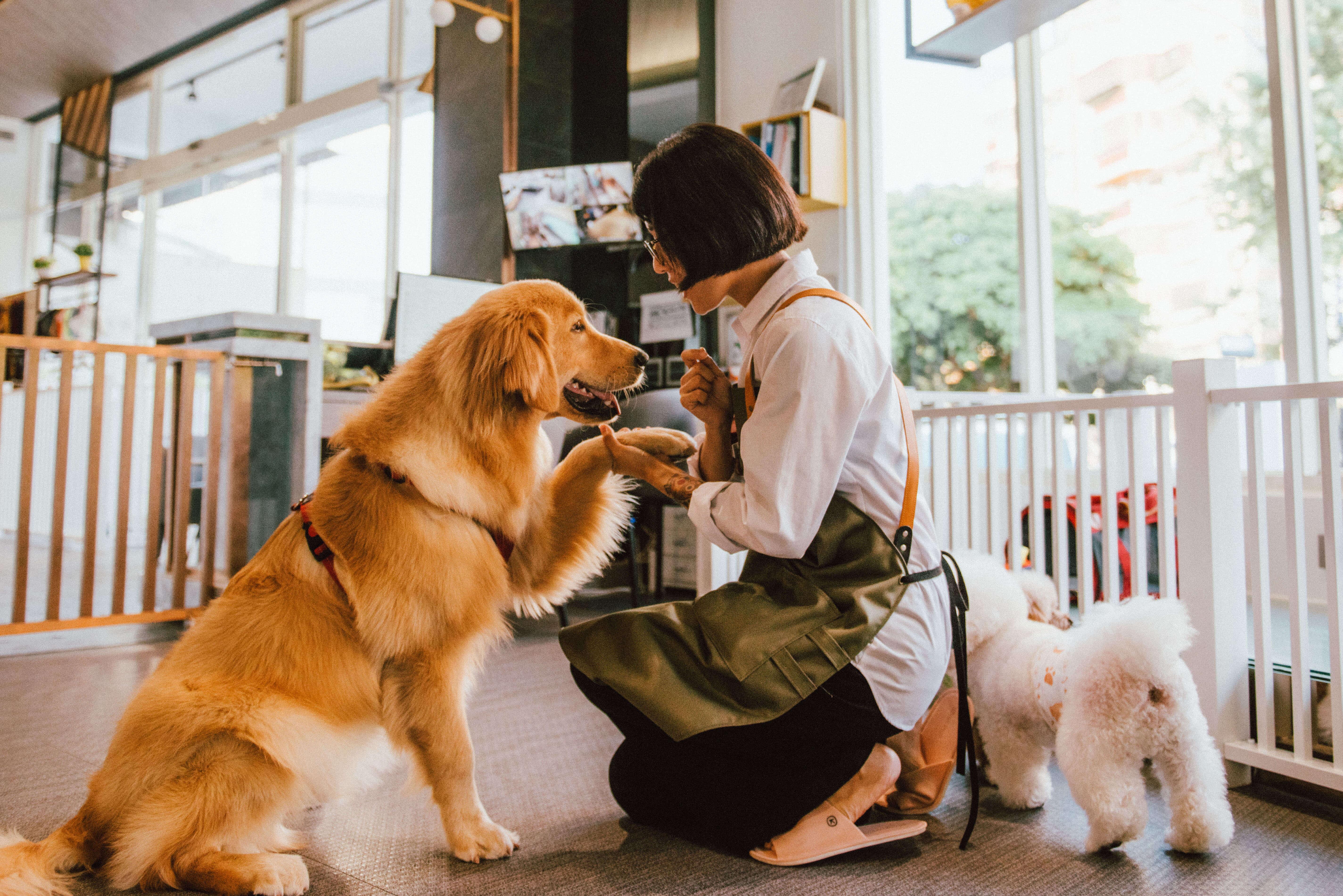 全台寵物旅館精選-沃夫寵物生活館