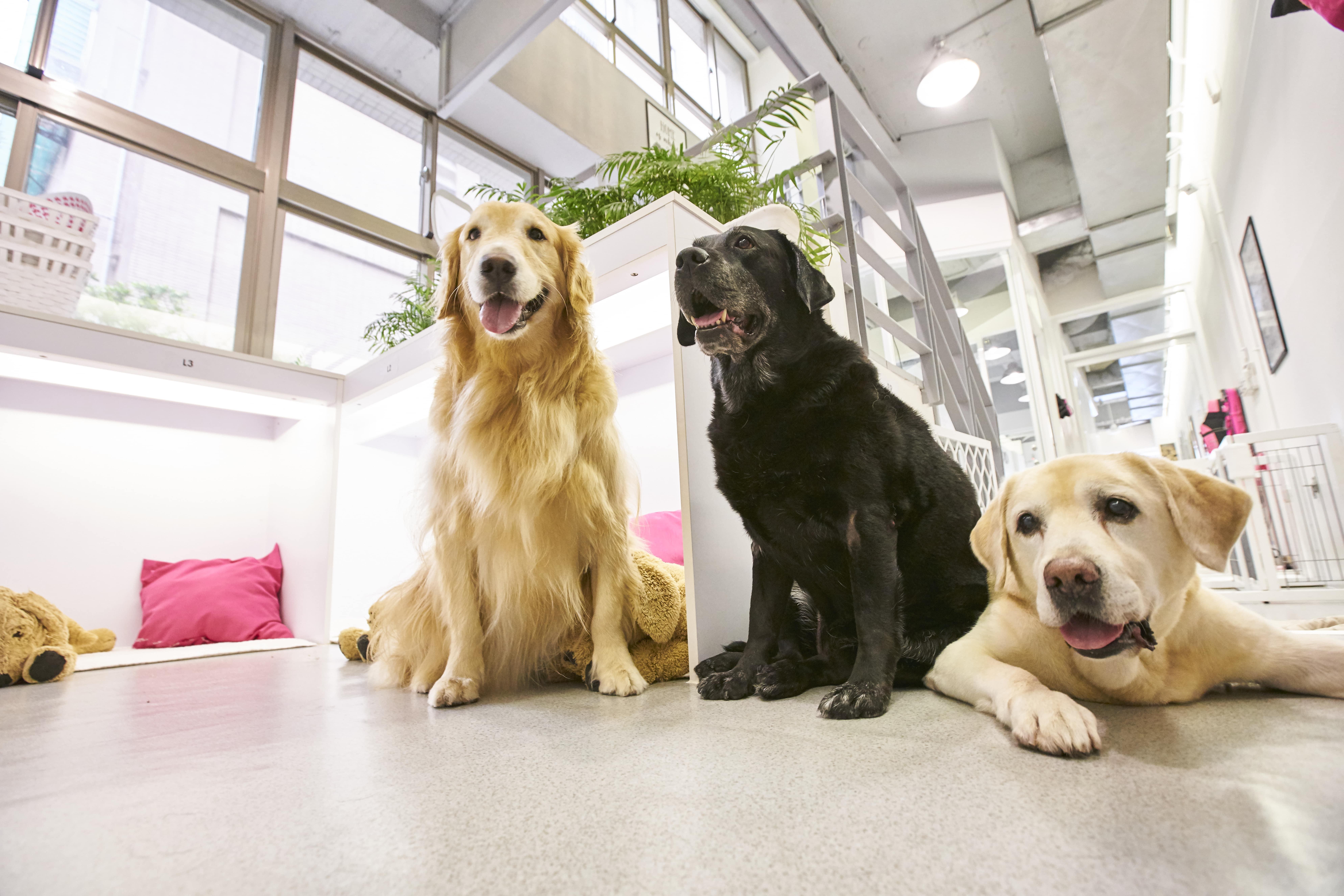 全台寵物旅館精選-北歐寵物旅館