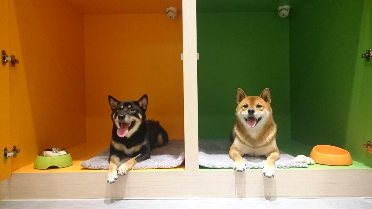 全台寵物旅館精選-好時光寵物旅館