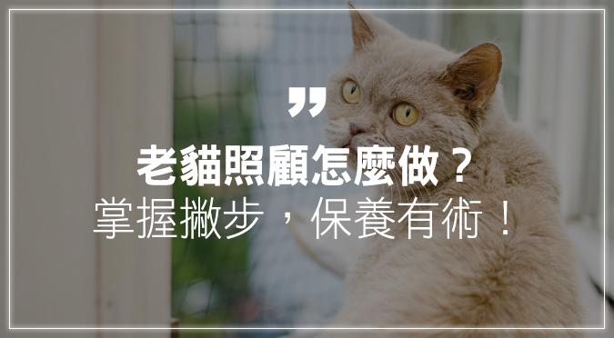 老貓照顧怎麼做?掌握撇步,保養有術!