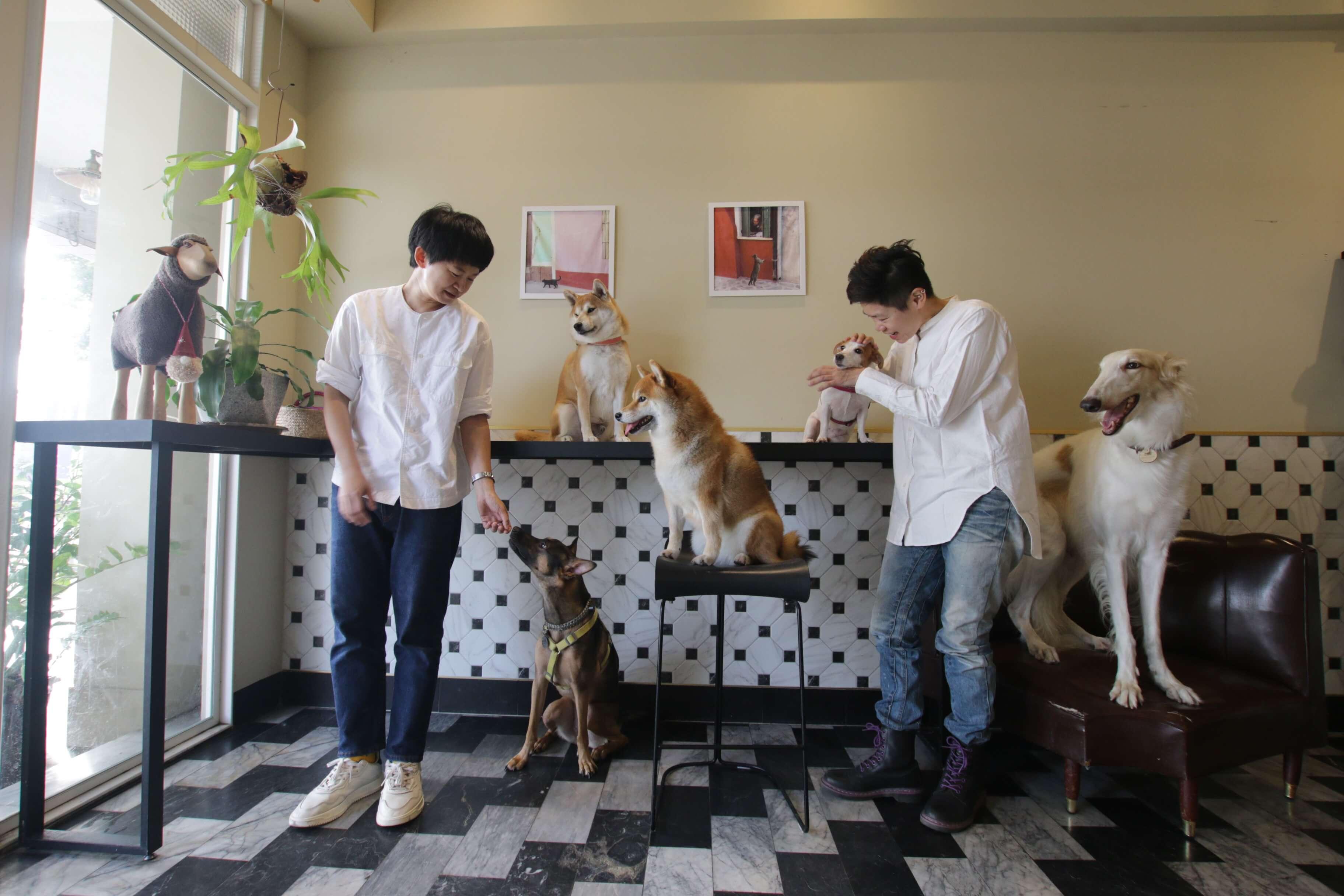 全台寵物旅館精選-史溫托爾寵物旅館