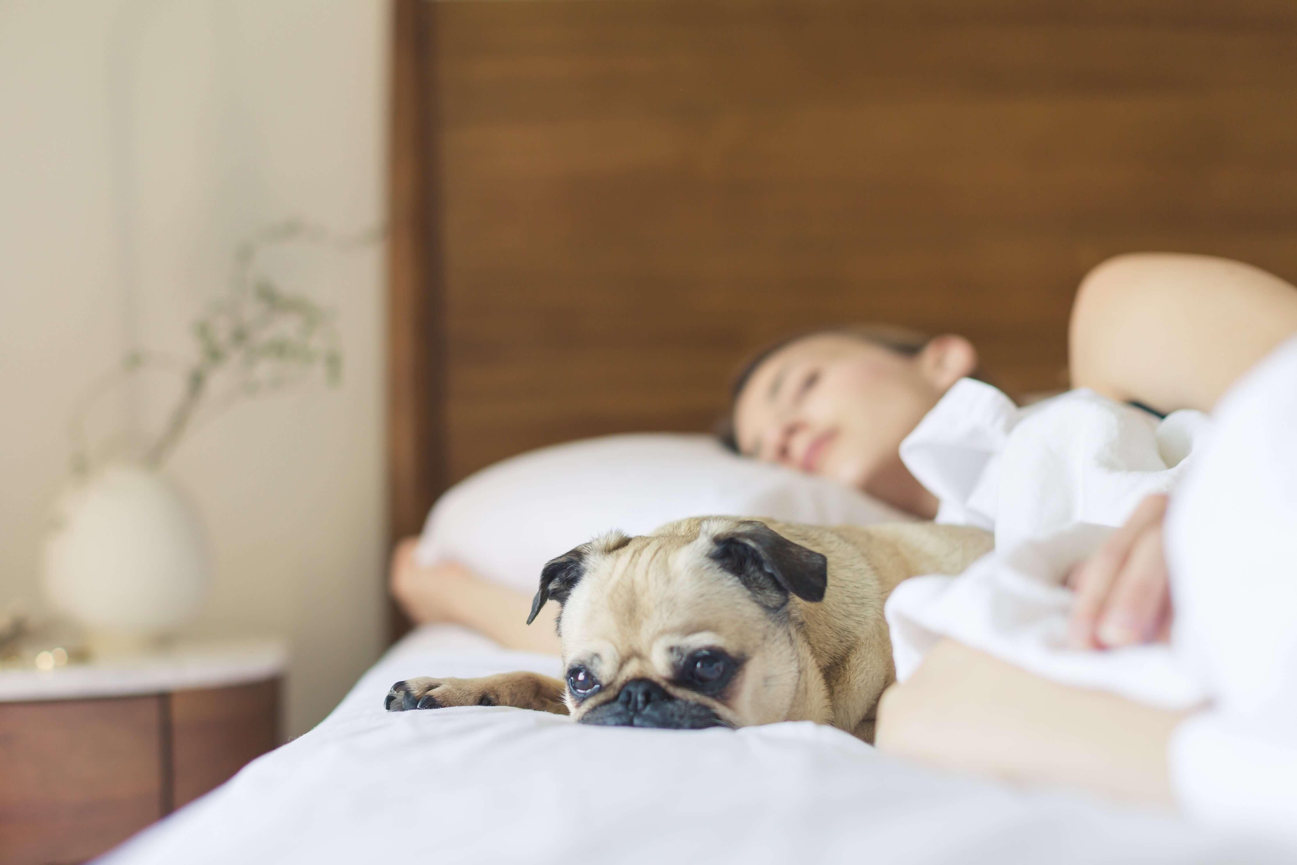 年紀較大或特定犬種容易在秋冬季節出現咳嗽、打噴嚏、流鼻水等症狀
