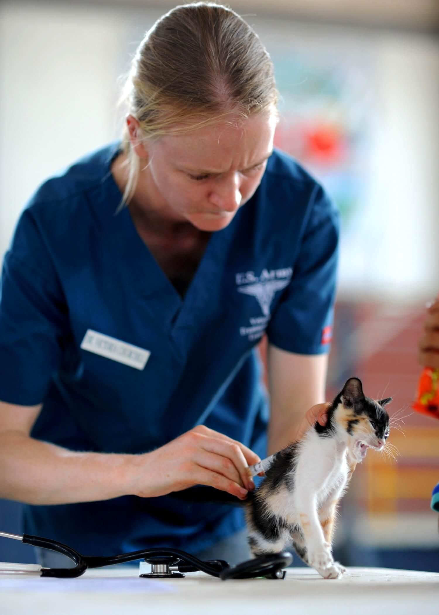 定期疫苗施打及驅蟲是寵物入住旅館的必備條件。