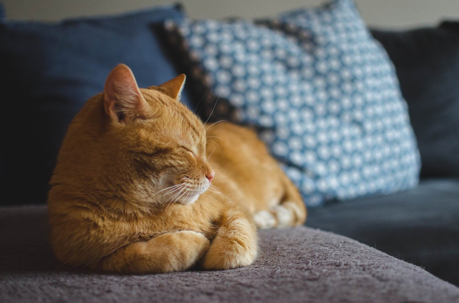 貓咪的獨立自主、溫暖陪伴,吸引了無數貓奴甘願成為鏟屎官