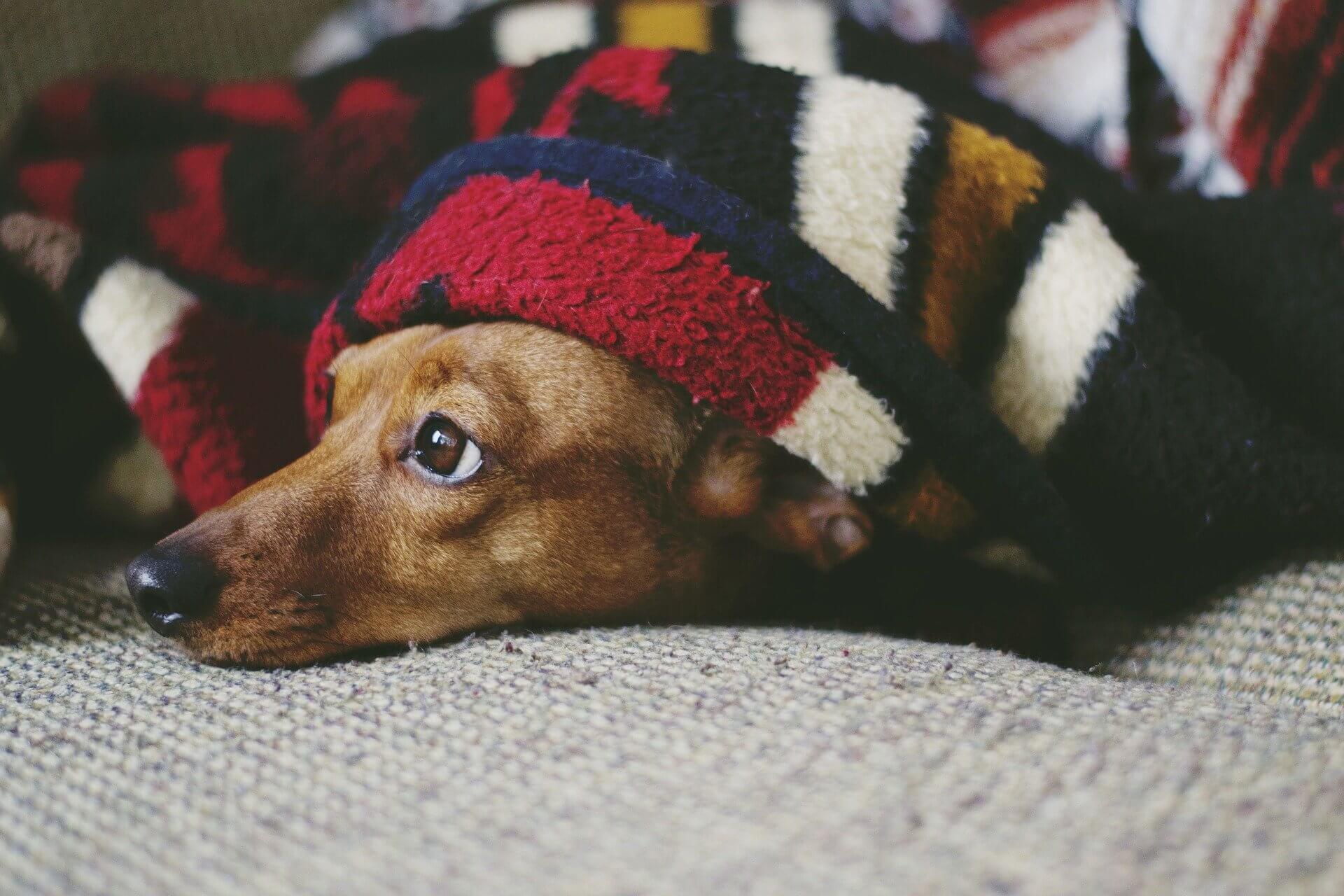 飼主只須提供基本的保暖用品,當毛孩覺得冷便會自行使用