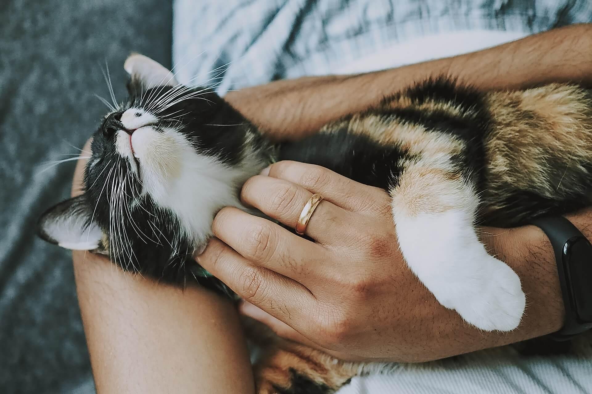 若能在收容所領養一隻健康、聰明的貓咪,讓他有個溫暖的家,相信會是一個更好的選擇
