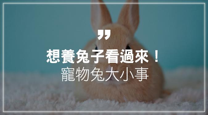 想養兔子看過來!寵物兔品種、照護懶人包