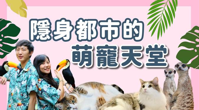 哈寵PETube-No.160 隱身都市的萌寵天堂(feat.肉球森林)