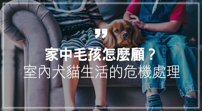家中毛孩怎麼顧?室內犬貓生活的危機處理