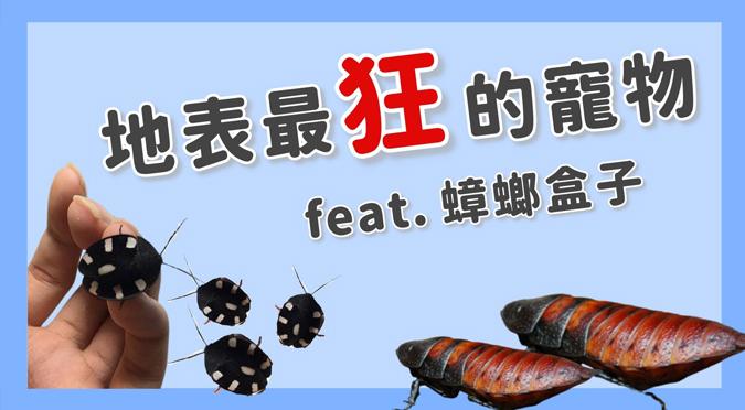 哈寵PETube-No.163 地表最狂的寵物(feat.蟑螂盒子)