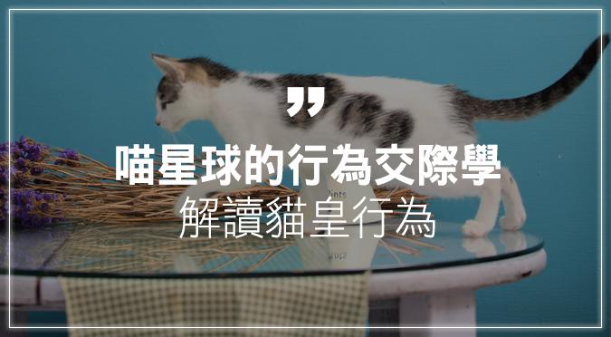 喵星球的行為交際學 解讀貓皇行為