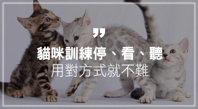 貓咪訓練停、看、聽 用對方式就不難