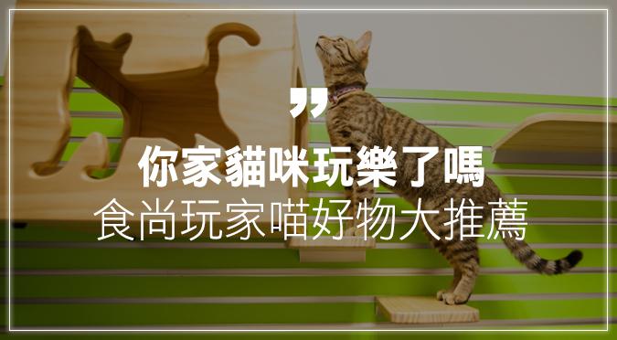 你家貓咪玩樂了嗎?食尚玩家喵好物大推薦