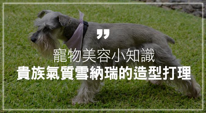 寵物美容小知識:貴族氣質雪納瑞的造型打理