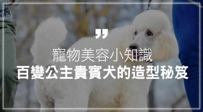 寵物美容小知識:百變公主貴賓犬的造型秘笈