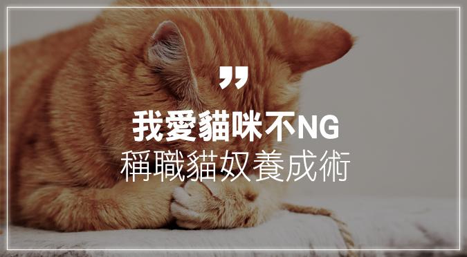我愛貓咪不NG 稱職貓奴養成術