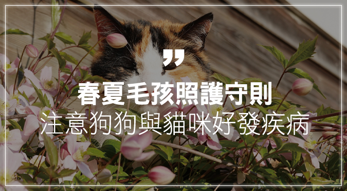 春夏毛孩照護守則 注意狗狗與貓咪好發疾病