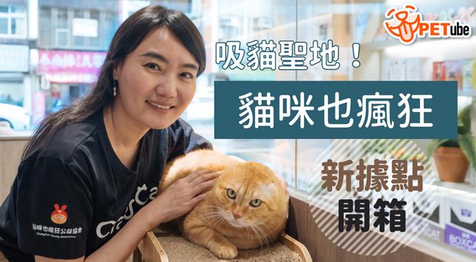 哈寵PETube-No.167 吸貓聖地!《貓咪也瘋狂俱樂部》台北新據點開箱