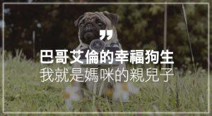 巴哥艾倫的幸福狗生 我就是媽咪的親兒子