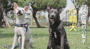 心輔犬 叼來幸福的小幫手