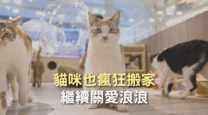貓咪也瘋狂搬家 繼續關愛浪浪