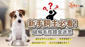 哈寵PETube-No.174 貓狗食物可以交換吃嗎? 新手飼主必看!破解毛孩餵食迷思