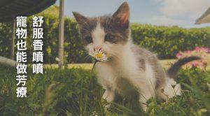 舒服香噴噴 寵物也能做芳療