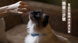 簡單三步驟 有助於貓咪泌尿道保健